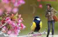 Hymn Book|Catholic Funeral Mass Booklet|BPP610816