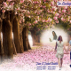 Hymn Book|Catholic Funeral Mass Booklet|BPP610822